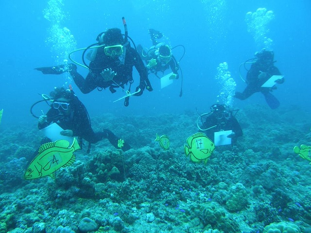 Fish And Coral Monitoring Techniques Training